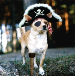 piratedog.jpg